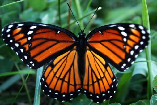 Butterfly 3880406520