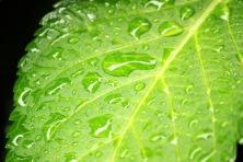 Rain on leaf 3871917570